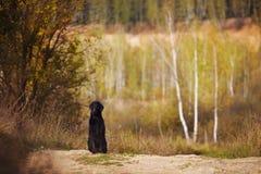 Perro perdiguero mojado que se sienta en el fondo de los árboles del otoño Foto de archivo