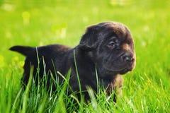 Perro, perrito en la hierba Foto de archivo libre de regalías