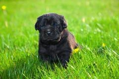 Perro, perrito en la hierba Fotografía de archivo
