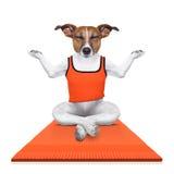 Perro personal del instructor de la yoga imagen de archivo