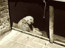 Perro pobre Foto de archivo
