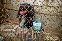 Perro pobre Fotografía de archivo libre de regalías
