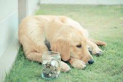 Perro pobre Imágenes de archivo libres de regalías