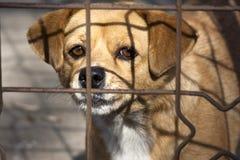 Perro pobre detrás de la jaula Imagen de archivo
