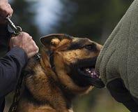 Perro policía Imagen de archivo libre de regalías