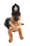 Perro policía Imagenes de archivo
