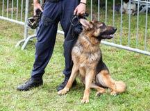 Perro policía Imagen de archivo