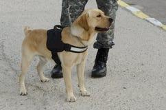 Perro policía Foto de archivo libre de regalías