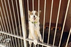 Perro positivo lindo que mira en el emotio de la jaula del refugio, feliz y triste Fotografía de archivo