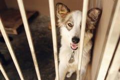 Perro positivo lindo que mira en el emotio de la jaula del refugio, feliz y triste Foto de archivo libre de regalías