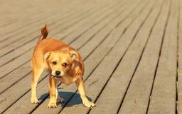 Perro precioso que juega solo al aire libre Imagen de archivo libre de regalías