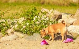 Perro precioso que juega solo al aire libre Foto de archivo libre de regalías