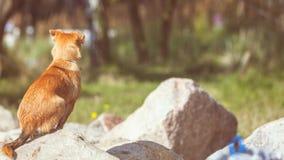 Perro precioso que juega solo al aire libre Fotos de archivo libres de regalías