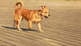 Perro precioso que juega solo al aire libre Imágenes de archivo libres de regalías