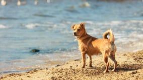 Perro precioso que juega solo al aire libre Fotografía de archivo libre de regalías