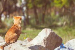 Perro precioso que juega solo al aire libre Foto de archivo