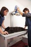 Perro preparado veterinario para la radiografía Imagenes de archivo