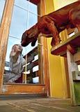 Perro que besa a la muchacha sobre el vidrio de la ventana Imagenes de archivo