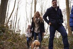 Perro que camina de la familia en la madera, papá que mira a la cámara, ángulo bajo Imágenes de archivo libres de regalías