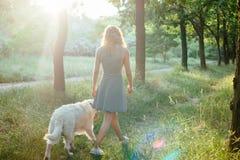 Perro que camina de la muchacha en parque Imágenes de archivo libres de regalías