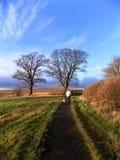 Perro que camina del hombre en Northumberland, Reino Unido Imagenes de archivo