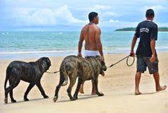 Perro que camina en la playa Imágenes de archivo libres de regalías