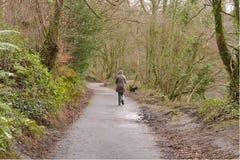 Perro que camina femenino Fotografía de archivo libre de regalías