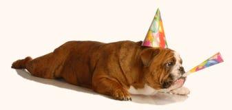 Perro que celebra cumpleaños imágenes de archivo libres de regalías