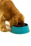 Perro que come fuera de un tazón de fuente Imagen de archivo