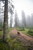 Perro que corre en la niebla Imagen de archivo
