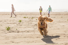 Perro que corre en la playa Imagen de archivo