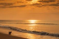 Perro que corre en la playa Imagenes de archivo