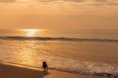 Perro que corre en la playa Fotos de archivo libres de regalías
