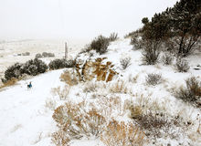 Perro que corre en las montañas Nevado de Denver Colorado Foto de archivo