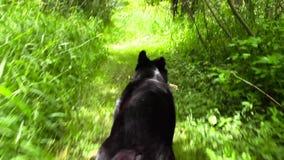 Perro que corre a través de bosque almacen de metraje de vídeo