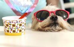 Perro que descansa después de tomar del helado imagen de archivo libre de regalías