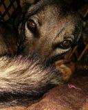 perro que dice el don& x27; t perturba Imágenes de archivo libres de regalías