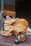 Perro que dormita en el centro de ciudad de Baden Baden Germany Imagen de archivo