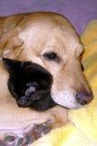 Perro que duerme con el gato Fotos de archivo