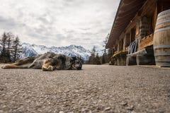 Perro que duerme en el camino de la monta?a Monta?as coronadas de nieve en el fondo imagenes de archivo