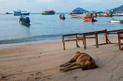 Perro que duerme en la costa de mar Fotos de archivo