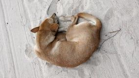 perro que duerme en la playa de la arena Imagenes de archivo