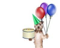 Perro que entrega la torta y los globos de cumpleaños Fotos de archivo libres de regalías
