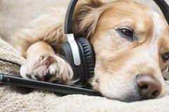 Perro que escucha el teléfono móvil de la música nuevo Fotografía de archivo libre de regalías