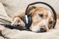 Perro que escucha el teléfono móvil de la música nuevo Foto de archivo