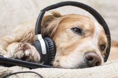 Perro que escucha el teléfono móvil de la música nuevo Fotos de archivo