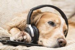 Perro que escucha el teléfono móvil de la música nuevo Imagen de archivo