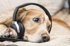 Perro que escucha el teléfono móvil de la música nuevo Imagenes de archivo