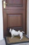 Perro que espera en la puerta principal Fotografía de archivo