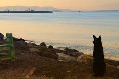 Perro que espera en puerto Fotos de archivo